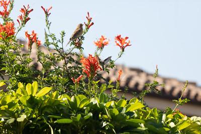 birdgarden-6097