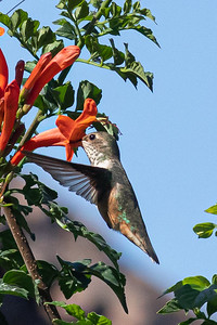 birdgarden2-6253