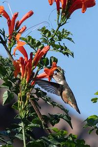 birdgarden2-6252