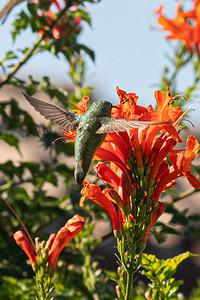 birdgarden-6099
