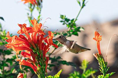 birdgarden-6092