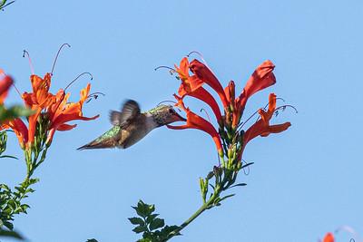 birdgarden2-6243