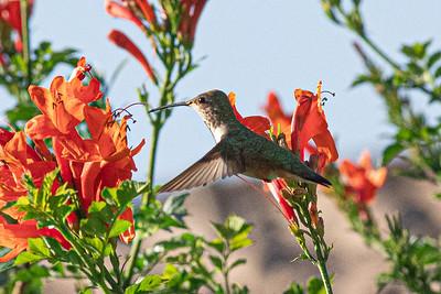 birdgarden-6088