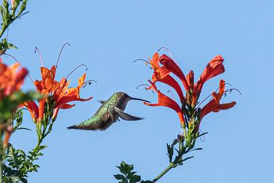 birdgarden2-6239