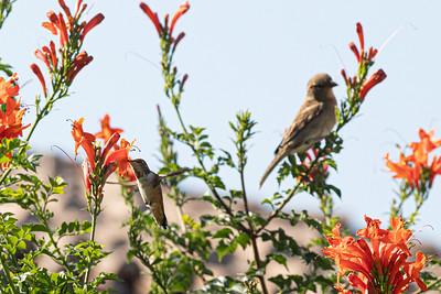 birdgarden-6102