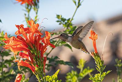 birdgarden-6093