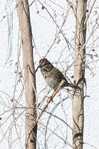 birdgarden2-6208