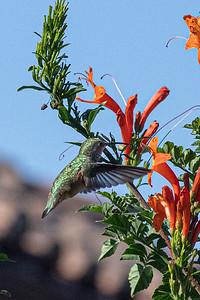 birdgarden2-6255