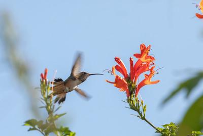 birdgarden-6154