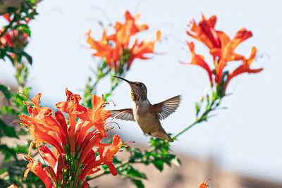 birdgarden-6089