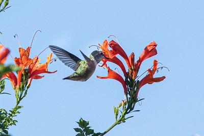 birdgarden2-6247