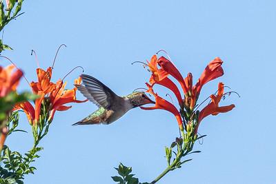 birdgarden2-6241