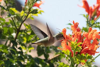 birdgarden-6081