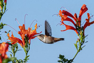 birdgarden2-6230