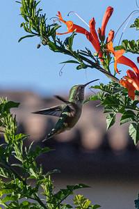 birdgarden2-6256