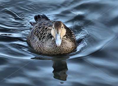 SLIMBRIDGE_070