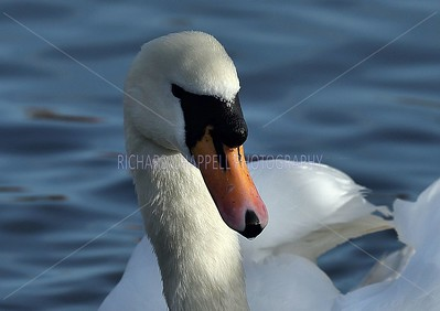SLIMBRIDGE_112