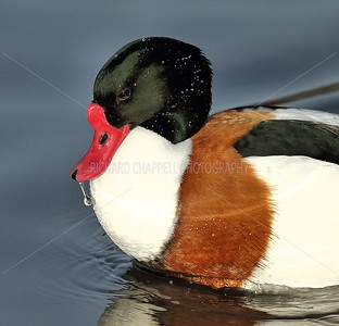 SLIMBRIDGE_145