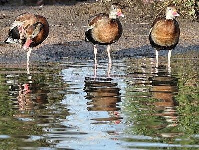 SLIMBRIDGE_153