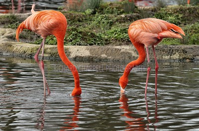 SLIMBRIDGE_258