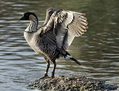 SLIMBRIDGE_170