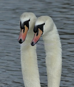 SLIMBRIDGE_249