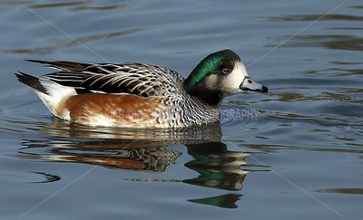 SLIMBRIDGE_148