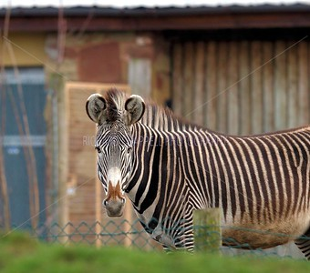 CHESTER ZOO VISIT PICTURES 15th MARCH 2014