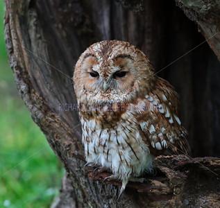 BWC OWLS_080