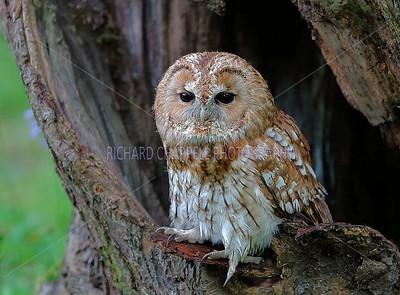 BWC OWLS_047