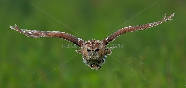 BWC OWLS_330