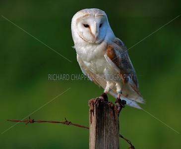 BWC OWLS_742