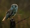BWC OWLS_729