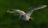 BWC OWLS_655