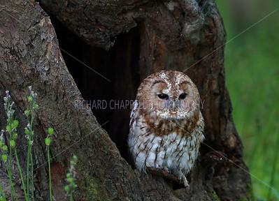 BWC OWLS_073