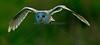 BWC OWLS_643a