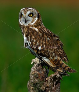 BWC OWLS_233