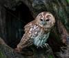 BWC OWLS_089