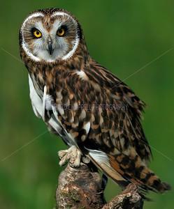 BWC OWLS_261