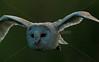 BWC OWLS_643