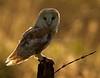 BWC OWLS_693