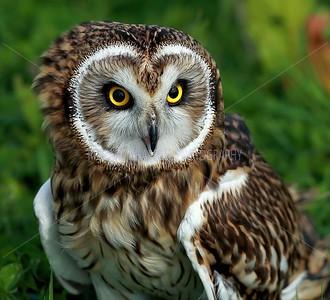 BWC OWLS_277