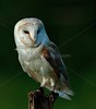 BWC OWLS_743