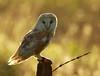 BWC OWLS_690