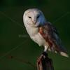 BWC OWLS_788