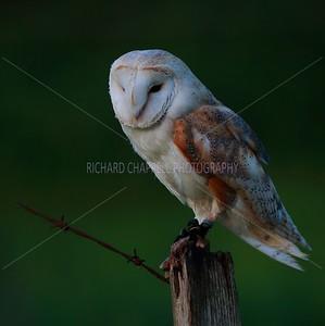 BWC OWLS_764