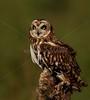 BWC OWLS_212