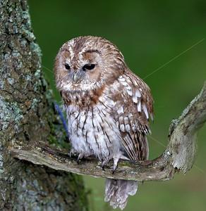 BWC OWLS_038