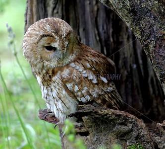 BWC OWLS_074