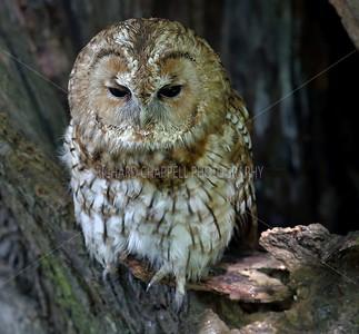 BWC OWLS_110